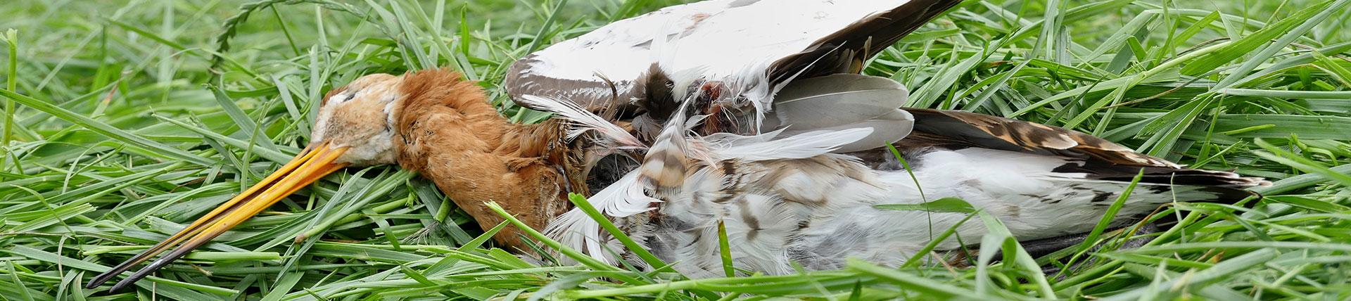 reddegrutto-vogelwerkgroep-geesteren2